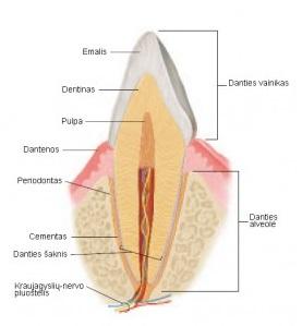 danties-sandaros-schema